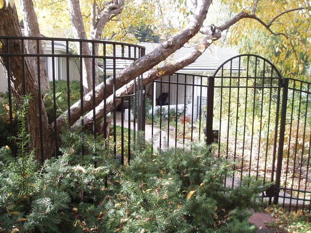Curved fencing and matching gate