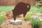 Buff Buffalo